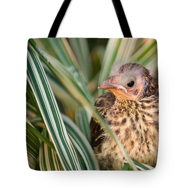 Baby Bird Peering Out Tote Bag by Douglas Barnett