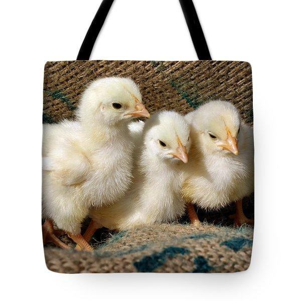 Baby Chicks Tote Bag by Sandy Keeton