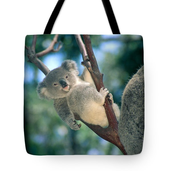Baby Koala Bear Tote Bag by Himani - Printscapes