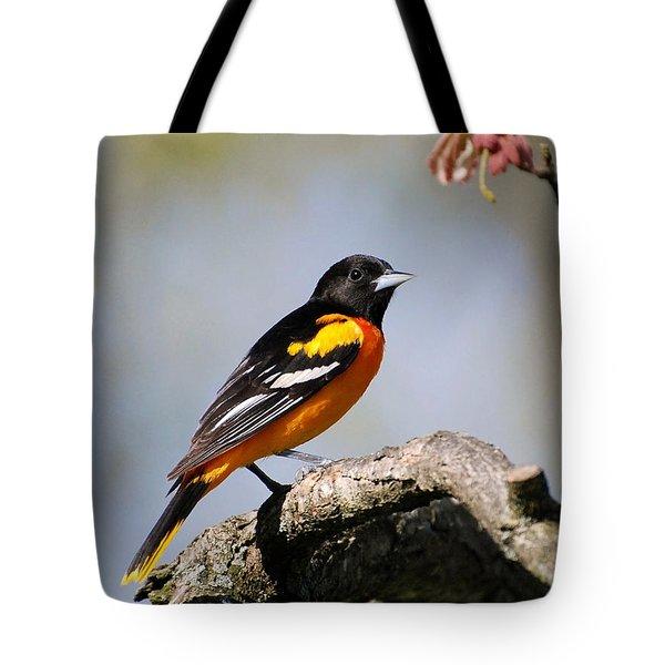 Baltimore Oriole Tote Bag by Christina Rollo