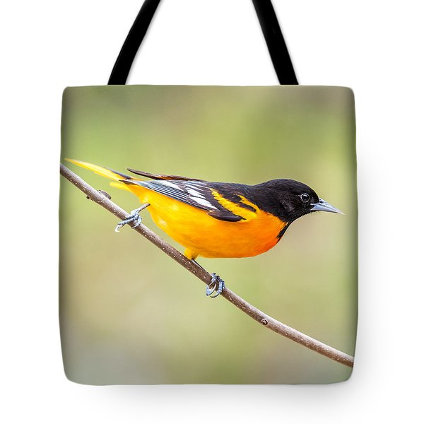 Baltimore Oriole Tote Bag by Paul Freidlund