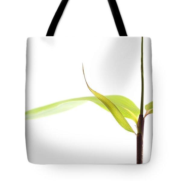Bamboo Meditation 1 Tote Bag by Carol Leigh