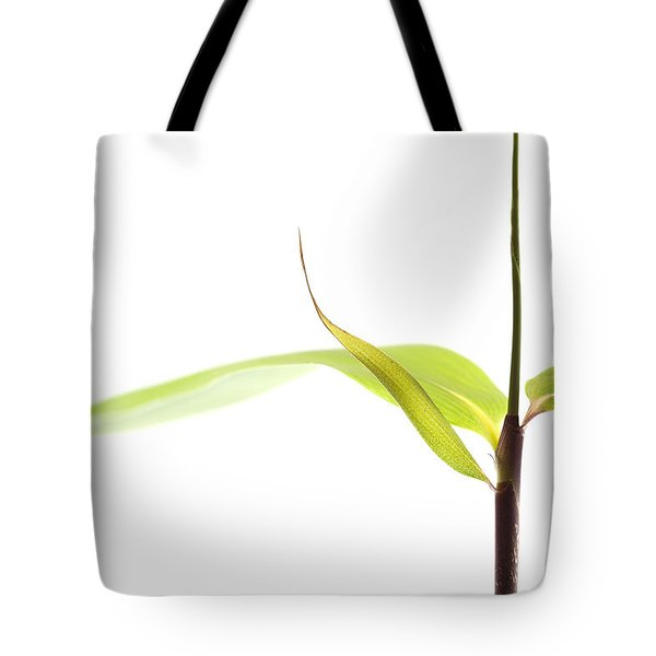 Bamboo Meditation 1 Tote Bag by Carol Leigh