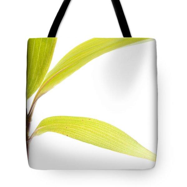 Bamboo Meditation 2 Tote Bag by Carol Leigh