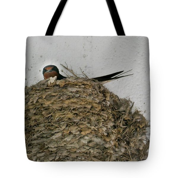 Barn Swallow Hirundo Rustica Tote Bag by Douglas Barnett