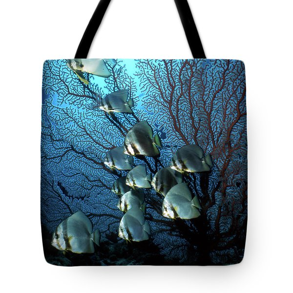 Batfish And Sea Fan, Papua New Guinea Tote Bag by Beverly Factor