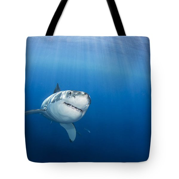 Beautiful Great White Tote Bag by Dave Fleetham - Printscapes
