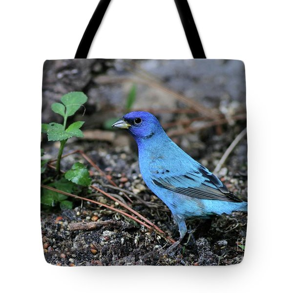 Beautiful Indigo Bunting Tote Bag by Sabrina L Ryan