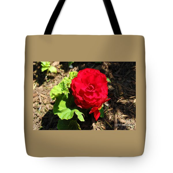 Begonia Flower - Red Tote Bag by Corey Ford