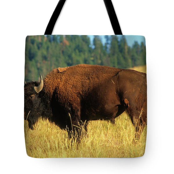 Bison Bull In The Late Evening Magic Light Tote Bag by Jerry Voss