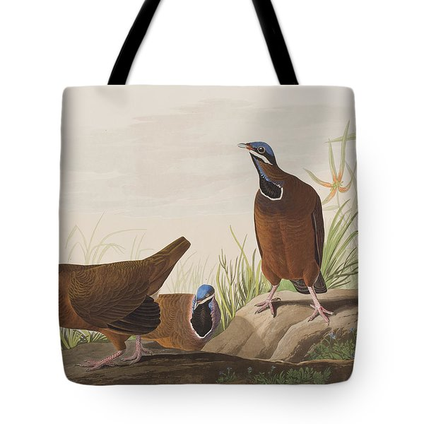 Blue Headed Pigeon Tote Bag by John James Audubon