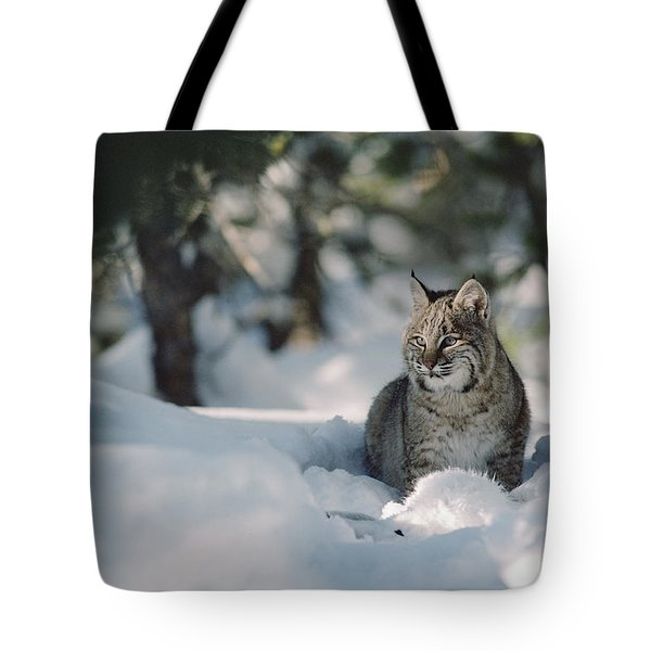 Bobcat Lynx Rufus Adult Resting In Snow Tote Bag by Michael Quinton