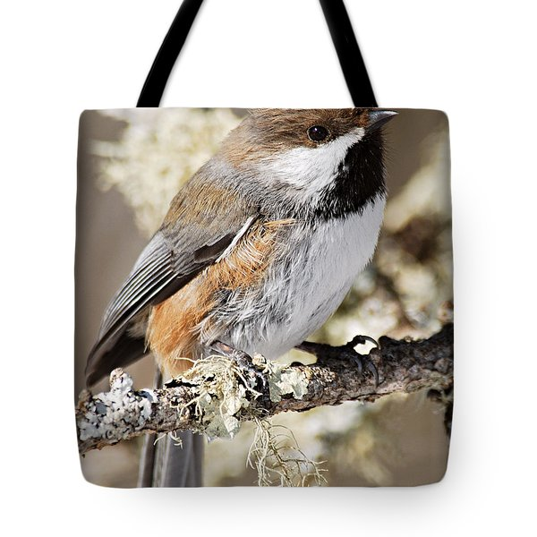 Boreal Chickadee Tote Bag by Larry Ricker