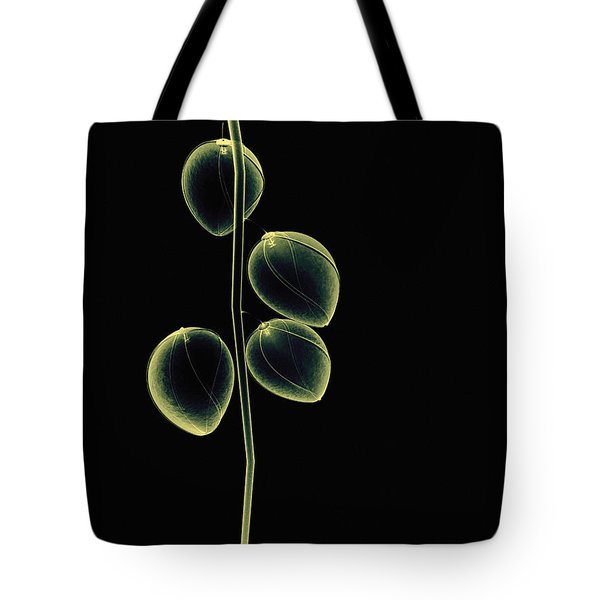 Botanical Study 2 Tote Bag by Brian Drake - Printscapes