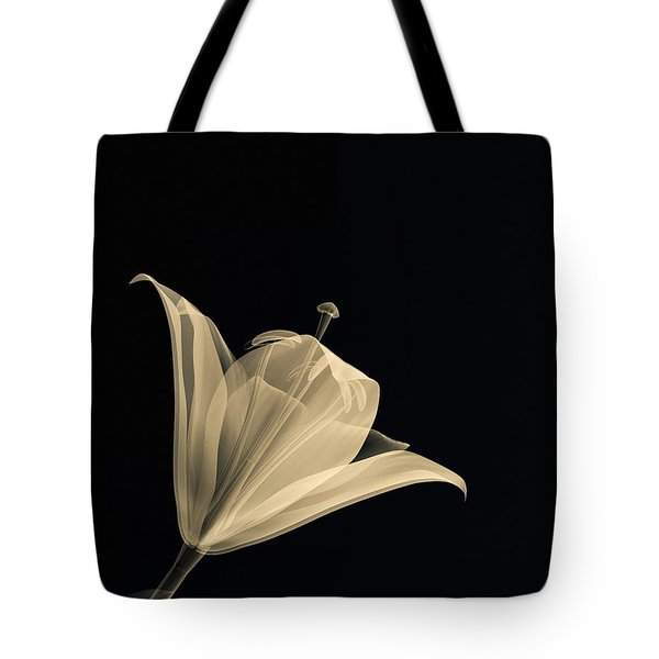 Botanical Study 3 Tote Bag by Brian Drake - Printscapes