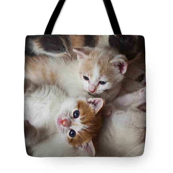 Box Full Of Kittens Tote Bag by Garry Gay
