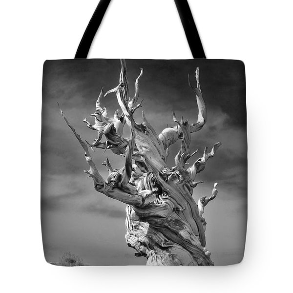 Bristlecone Pine - A Survival Expert Tote Bag by Christine Till