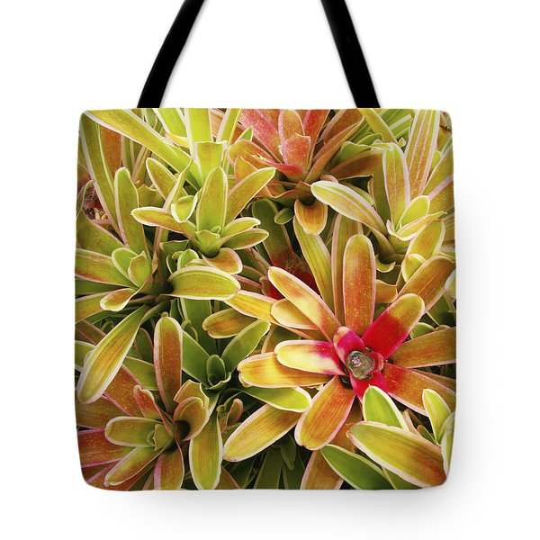 Bromeliad Brightness Tote Bag by Ron Dahlquist - Printscapes