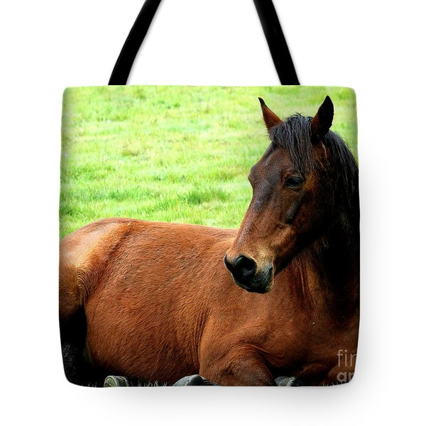 Brown Horse At Rest . R5906 Tote Bag by Wingsdomain Art and Photography