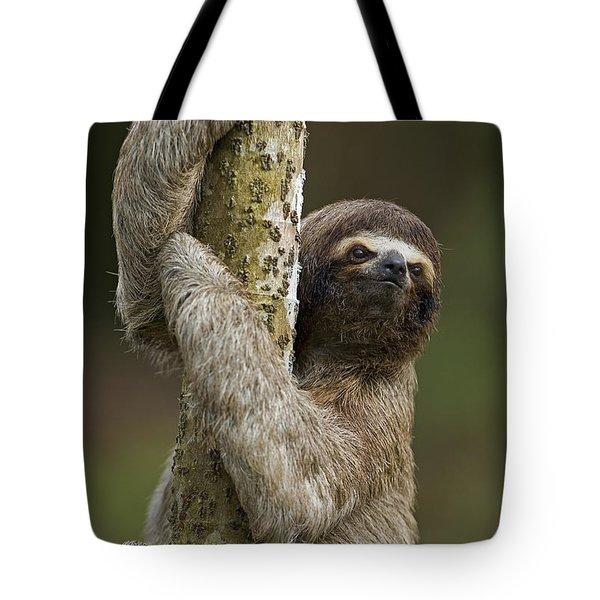 Brown-throated Three-toed Sloth Tote Bag by Ingo Arndt
