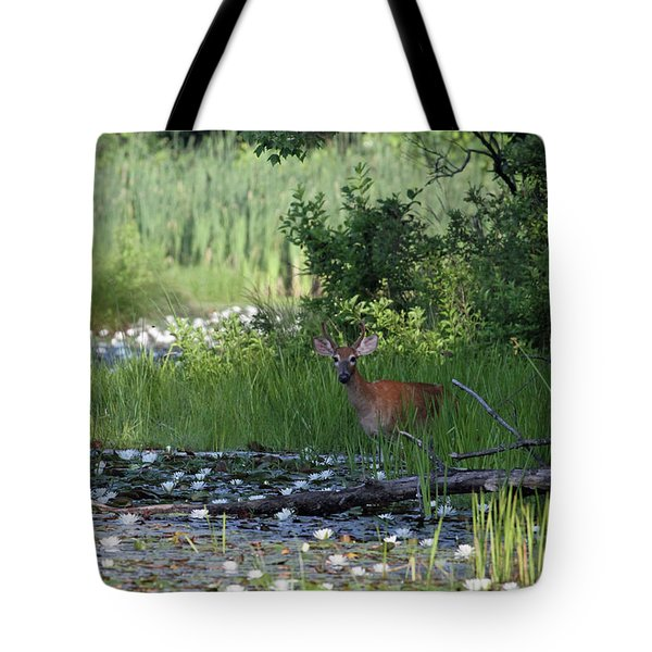 Buck In Pond Tote Bag by Karol Livote
