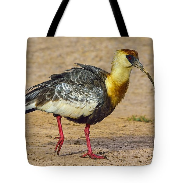 Buff-necked Ibis Tote Bag by Tony Beck