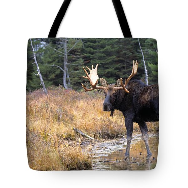 Bull Moose In Stream Tote Bag by Natural Selection Bill Byrne