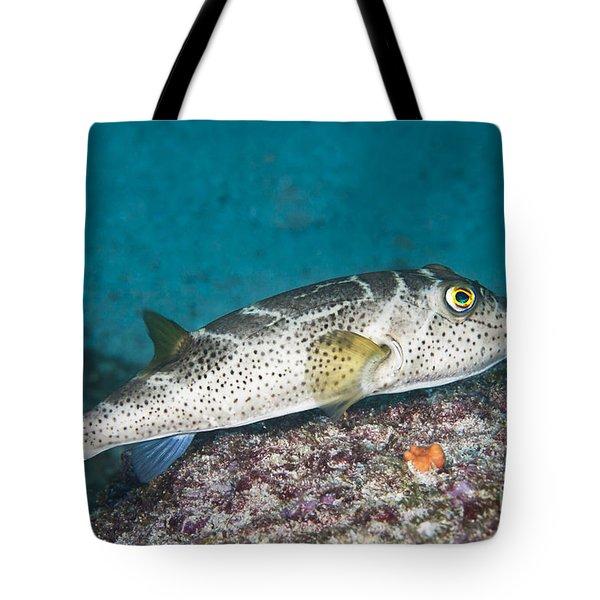 Bullseye Puffer - Galapagos Tote Bag by Dave Fleetham - Printscapes