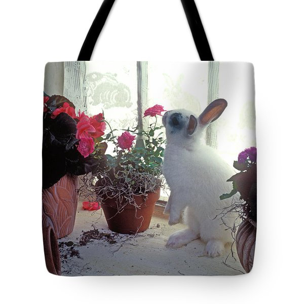 Bunny In Window Tote Bag by Garry Gay