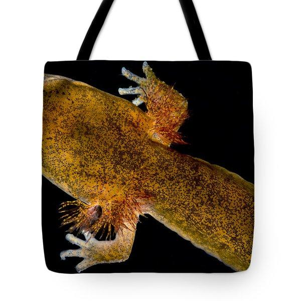 California Giant Salamander Larva Tote Bag by Dant� Fenolio