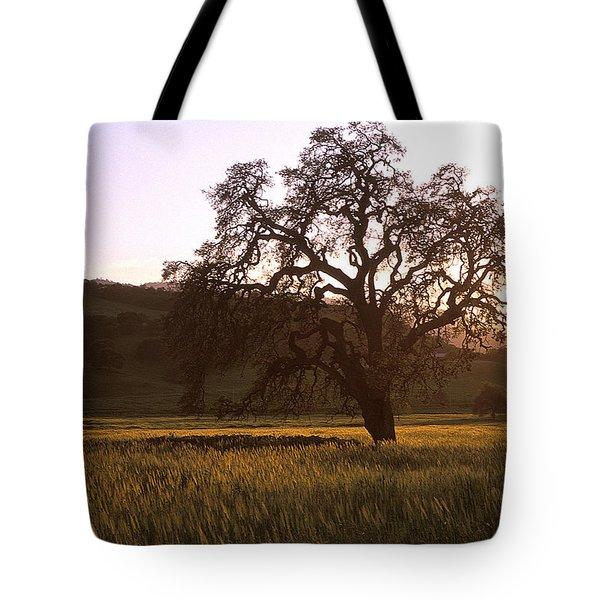 California Hwy 25 Oak Tote Bag by Kathy Yates