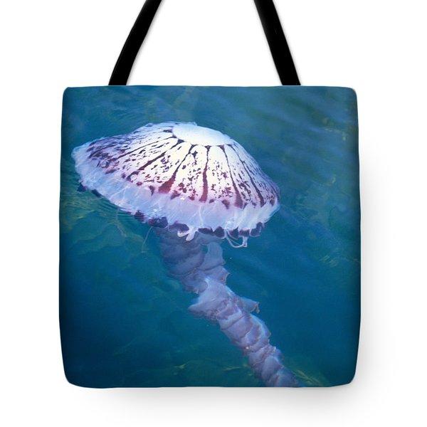 California Marine Life Tote Bag by Bill Schildge - Printscapes