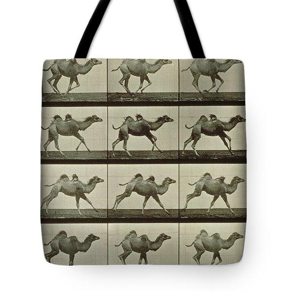 Camel Tote Bag by Eadweard Muybridge