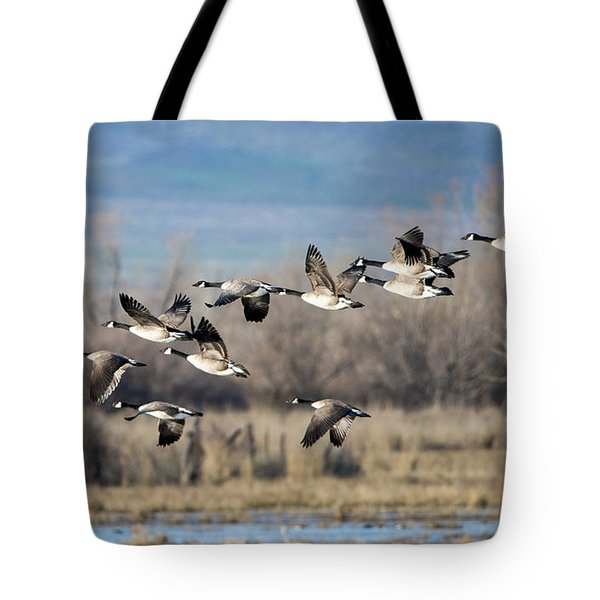 Canada  Geese Flock Tote Bag by Mike Dawson
