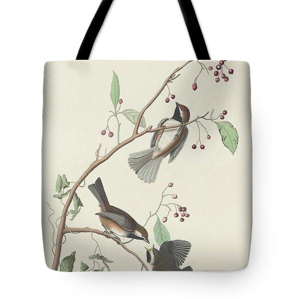 Canadian Titmouse Tote Bag by John James Audubon