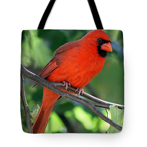 Cardinal Tote Bag by Juergen Roth