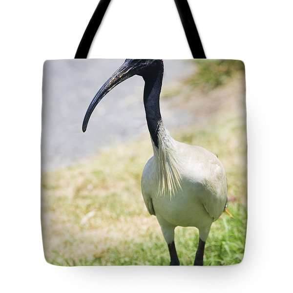 Carpark Ibis Tote Bag by Jorgo Photography - Wall Art Gallery