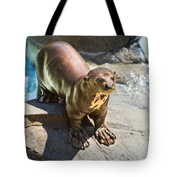 Catching Some Sun Tote Bag by Jamie Pham