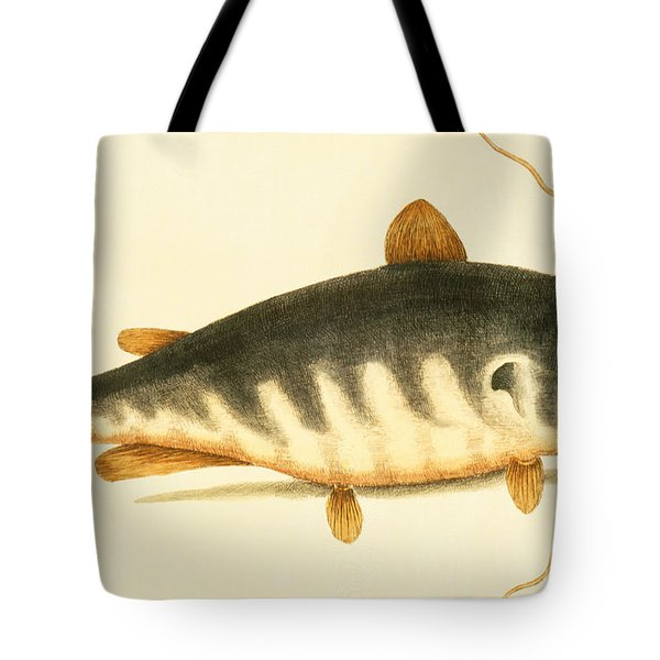 Catfish Tote Bag by Mark Catesby
