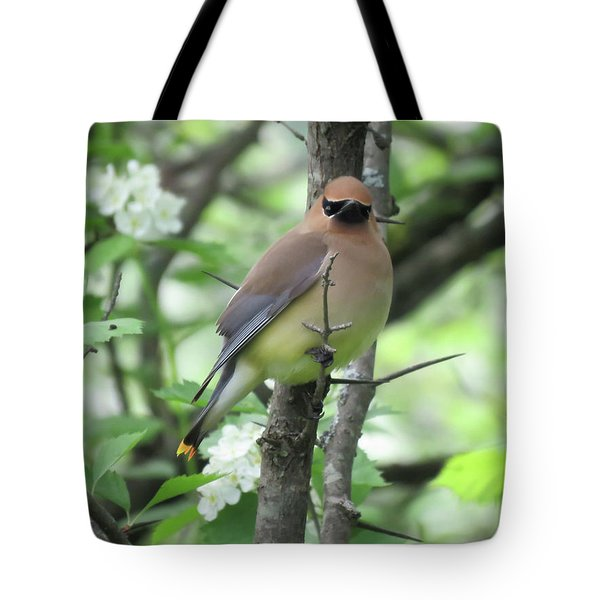 Cedar Wax Wing Tote Bag by Alison Gimpel