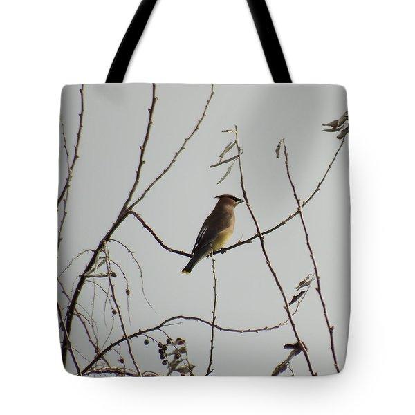 Cedar Wax Wing In Tree Tote Bag by Kenneth Willis