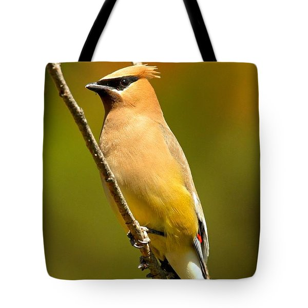 Cedar Waxwing Tote Bag by Adam Jewell