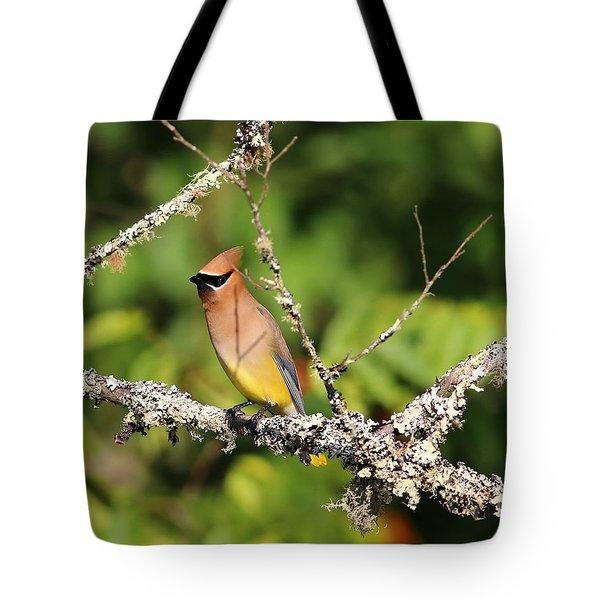 Cedar Waxwing  Tote Bag by Carol R Montoya