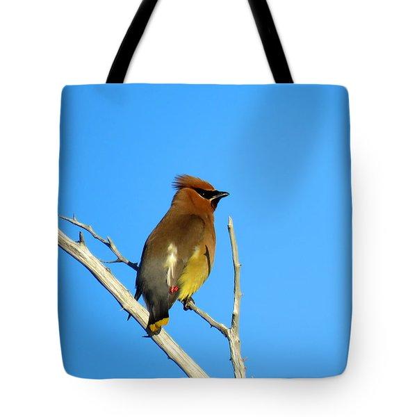 Cedar Waxwing Tote Bag by Dianne Cowen