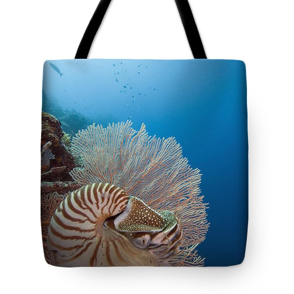 Chambered Nautilus Tote Bag by Dave Fleetham - Printscapes