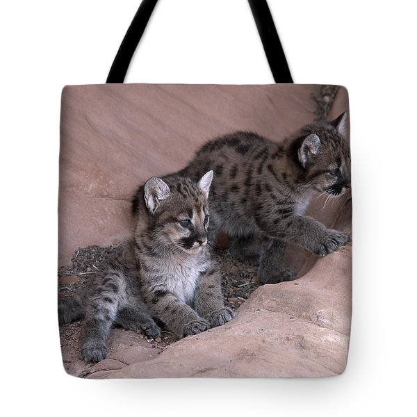 Checking It Out Tote Bag by Sandra Bronstein