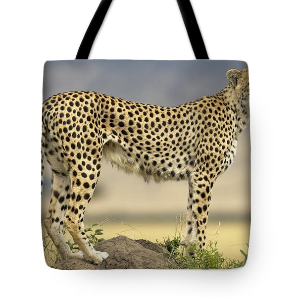 Cheetah Acinonyx Jubatus On Termite Tote Bag by Winfried Wisniewski
