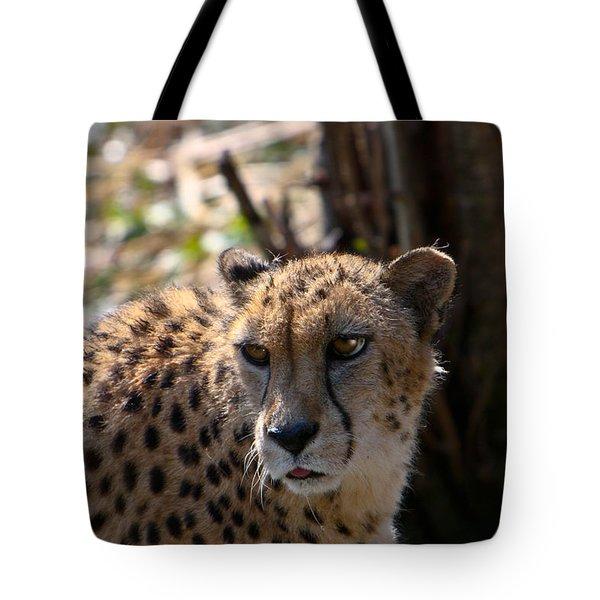 Cheetah Gazing Tote Bag by Douglas Barnett