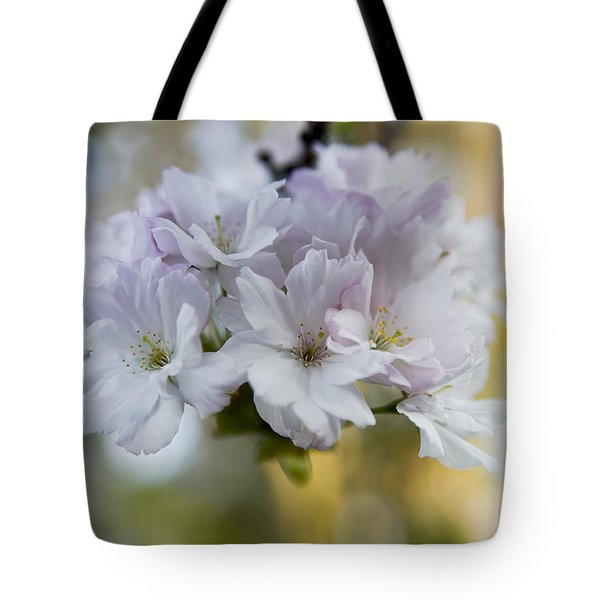 Cherry blossoms Tote Bag by Frank Tschakert