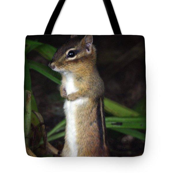 Chipmunk On Alert Tote Bag by Karol Livote
